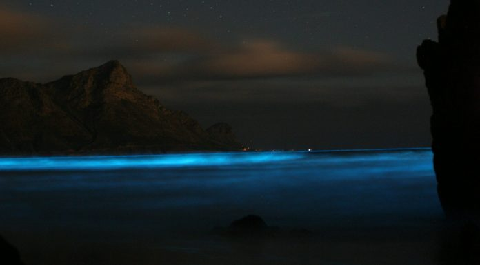 4 playas del mundo con aguas que se iluminan en la oscuridad