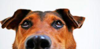 """La carita de arrepentimiento de tu perro no demuestra """"culpa"""" según la ciencia, ¡es otra cosa!"""