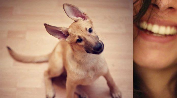 """¿Le hablas a tu cachorrito como si fuera un bebé """"¡Ay, qué bonito!""""? Descubre si le gusta"""