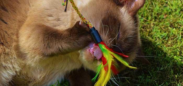 Las 5 personalidades de los gatos según los científicos