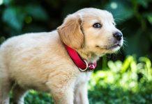¿Por qué los perros tienen cambios de energía repentinos? ¡Descubre la razón!