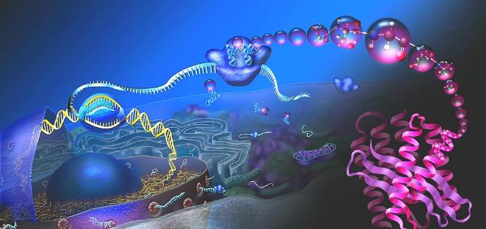 ¿Cómo se desarrolló la vida en la Tierra? La ciencia tiene una nueva respuesta.