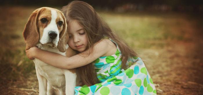 beagle amistoso