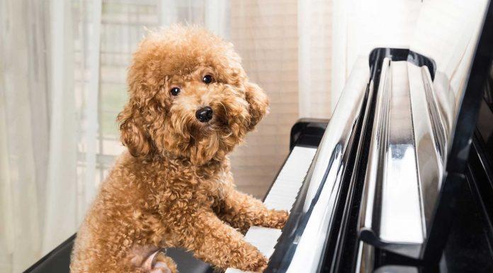 Cuál es la música favorita de los perros. Un estudio tiene la respuesta
