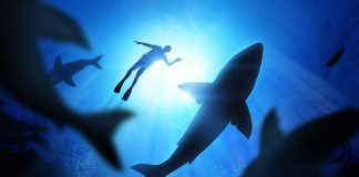 Algunas curiosidades sobre los tiburones que posiblemente no sabías