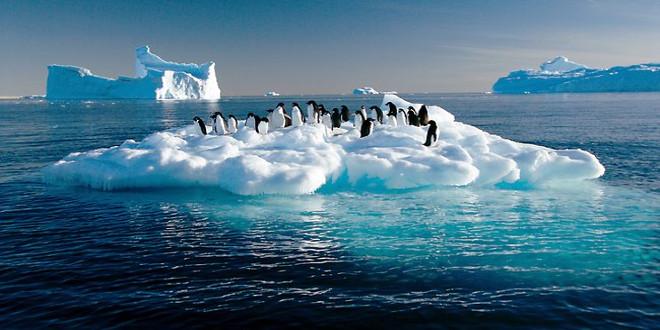 enfriar el ártico pingüinos