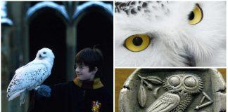 Harry y Hegwid, el significado espiritual de las lechuzas blancas