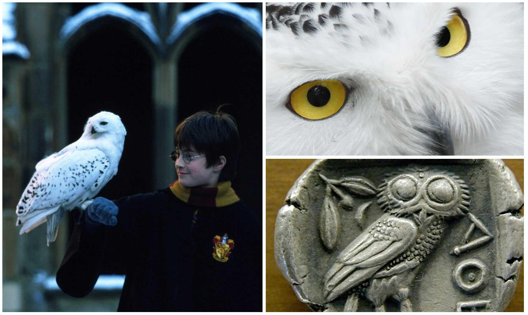 Harry Y Hedwig, El Significado Espiritual De Las Lechuzas