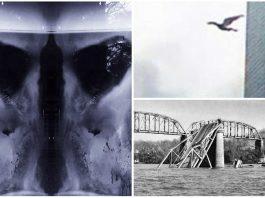 Mothman: 4 avistamientos del legendario hombre polilla
