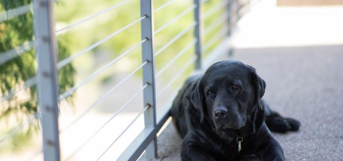 ¿Sabes qué es el síndrome del perro negro