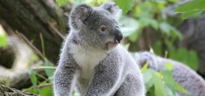 5 mitos de animales que creías ciertos y SON FALSOS