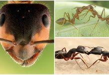 ¿Sabes por qué se besan las hormigas?
