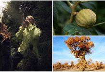 Algunos árboles explotan, se suicidan o chillan, ¿lo sabías?