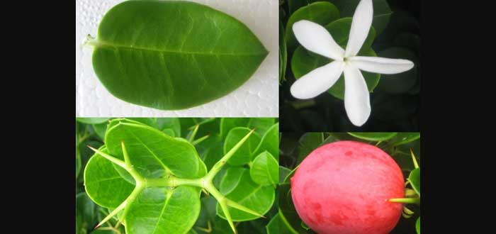 7 frutas comestibles que seguramente no conocías