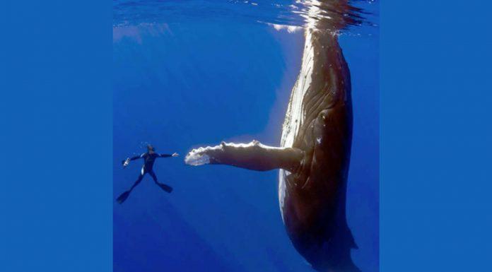 La historia detrás de esta increíble fotografía de un buceador y una ballena