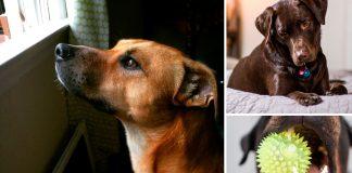 ¿Qué ocurre cuando dejas a tu perro solo en casa? Quizás no lo sepas...