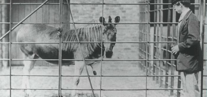 Estas imágenes de animales extintos te permiten disfrutar de su rareza hoy