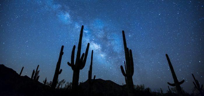 ¿Verdad o Mentira ¿Hay más árboles en la Tierra que estrellas en la Vía Láctea