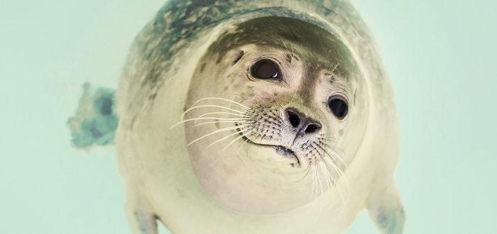 Antártida, foca