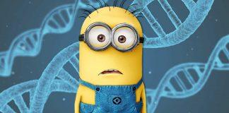"""El origen de los Minions según la ciencia. ¿""""Descendientes"""" de los humanos?"""