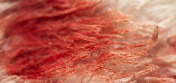 menstruación en el pasado, tela con sangre
