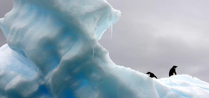 pingüinos, Antártida