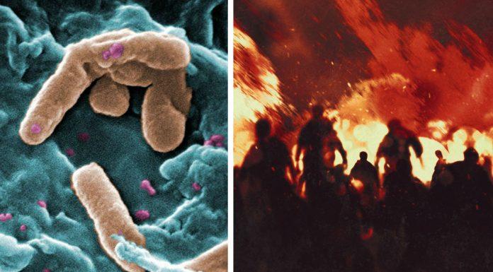 Superbacterias que amenazan a la humanidad : Pseudomonas aeruginosa