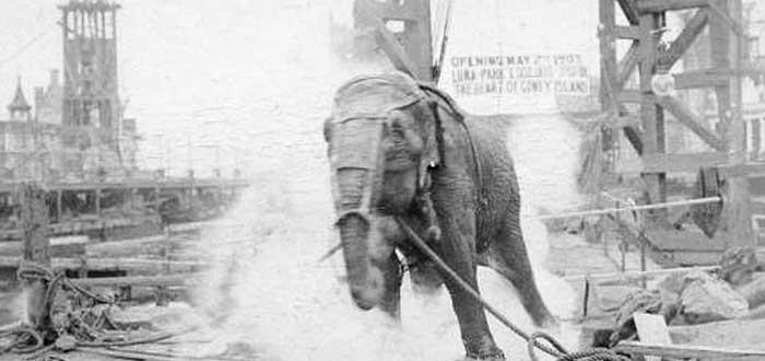 Topsy, la elefanta que electrocutó Edison para hundir a Tesla