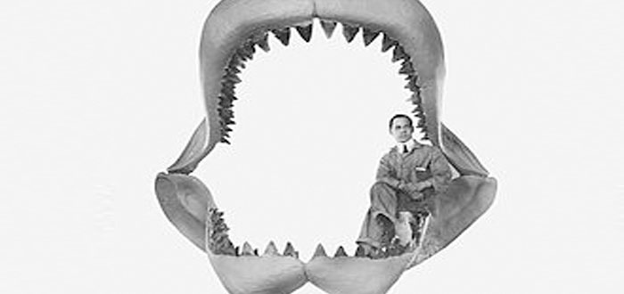 El misterio de la extinción del Megalodón, ¿resuelto? Hay una respuesta