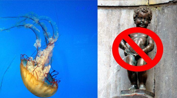 Esto es lo que deberías hacer si te pica una medusa, ¡NADA de orina!