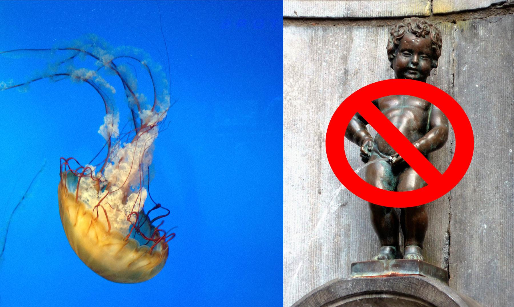 Resultado de imagen para medusa orina