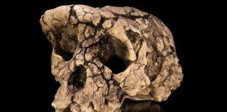 Los sorprendentes huesos de homo sapiens más antiguos jamás hallados