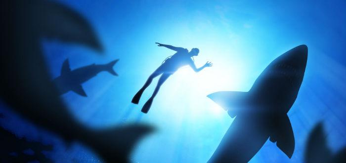 buceador, mitos sobre los tiburones