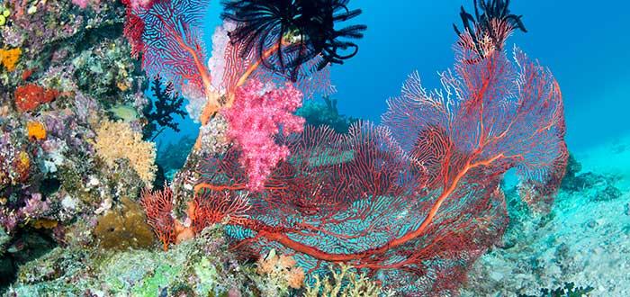 cosas rosas, corales, fiji