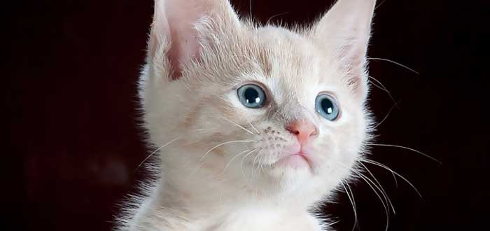 5 rasgos muy humanos que observamos en los gatos