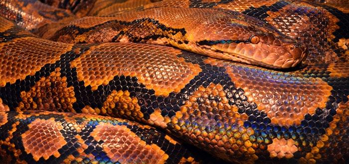 fobias más comunes, serpientes