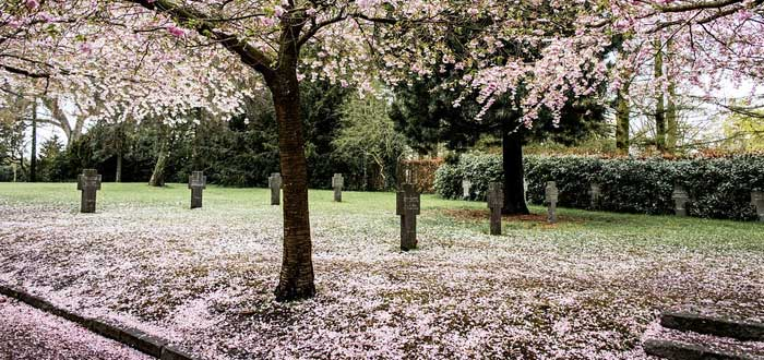 Hitodama, las almas de los recién fallecidos en Japón, pura LUZ