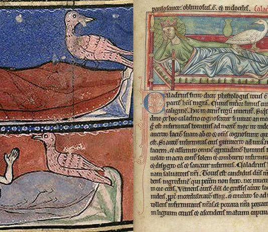 Caladrius, el ave mitológica que cura las enfermedades