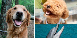 ¿Los animales ríen? ¡Veámoslo!