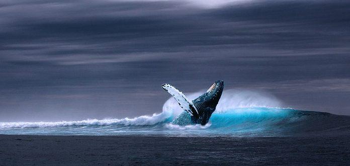 Sabrías detectar a una ballena escondida bajo el agua