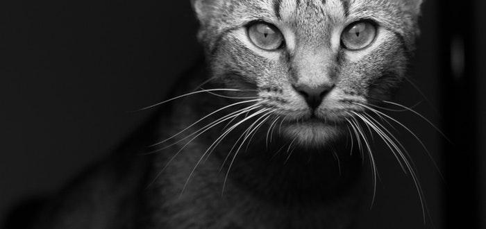 gato mirada