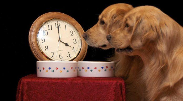 Cómo consiguen los perros saber qué hora es. La ciencia lo explica.