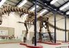 ¿Descubierto el mayor dinosaurio de todos los tiempos?