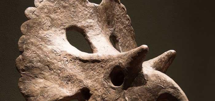 Descubren nueva especie de dinosaurio que vivió hace 73 millones de años