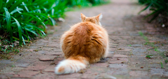 7 extrañas señales de que tu gato te ama