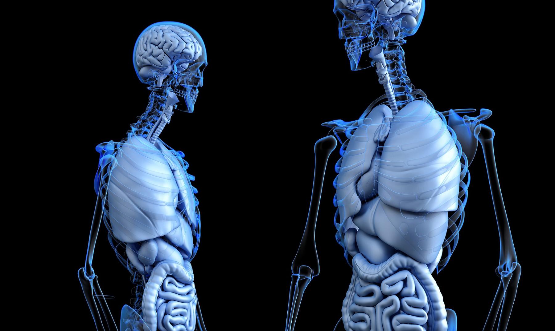 5 datos que debes conocer sobre el colon - Supercurioso