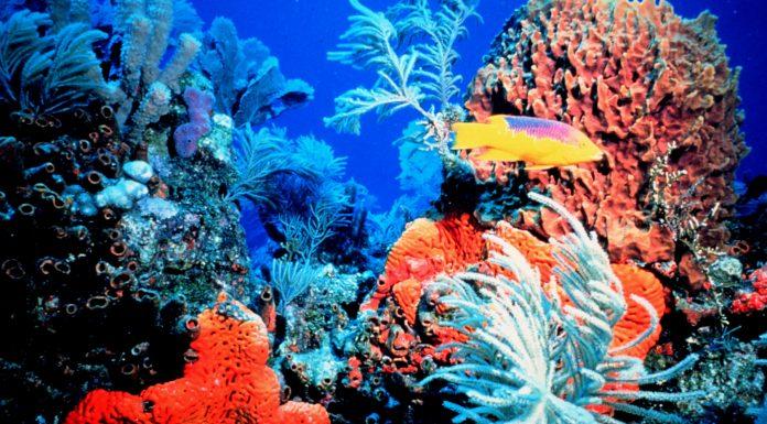 Lo que revela este antiguo mapa sobre la pérdida de arrecifes de coral