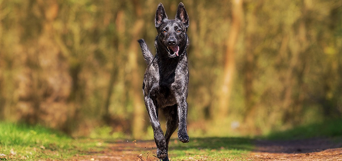 Los perros huelen el miedo