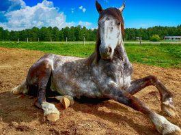 Por qué los caballos tienen pezuñas