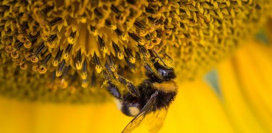 ¿Qué cosas desaparecerían si las abejas dejan de existir?